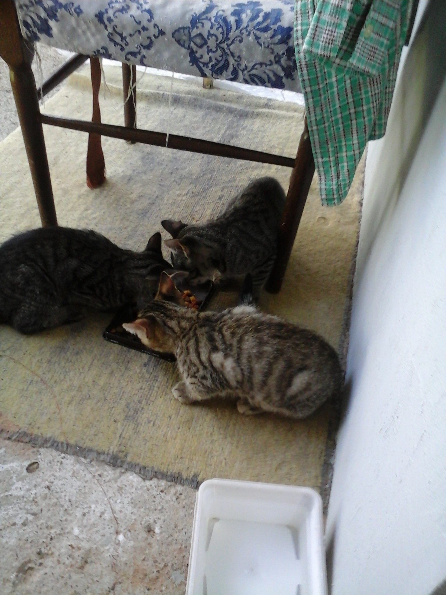 Tiger, Tom si Flufy